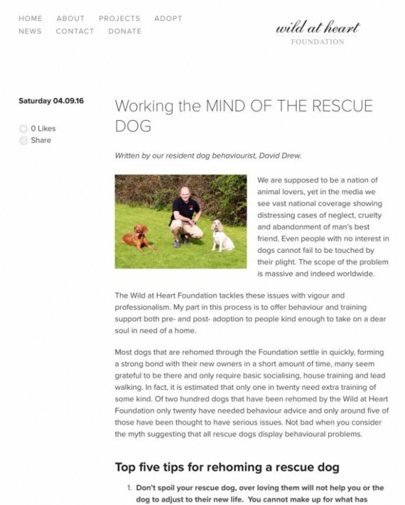 David writes an article for The Wild at Heart Foundation called 'Working with the Mind of the Rescue Dog'