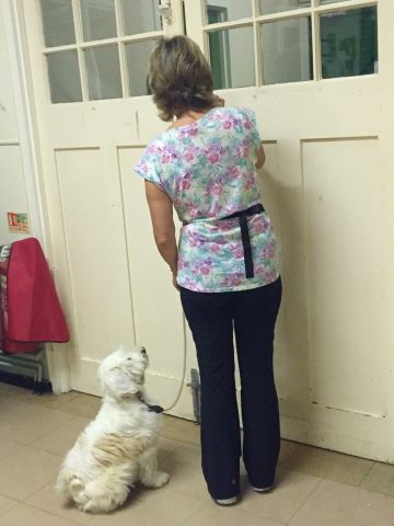Digby demonstrating perfect door manners when leaving the hall