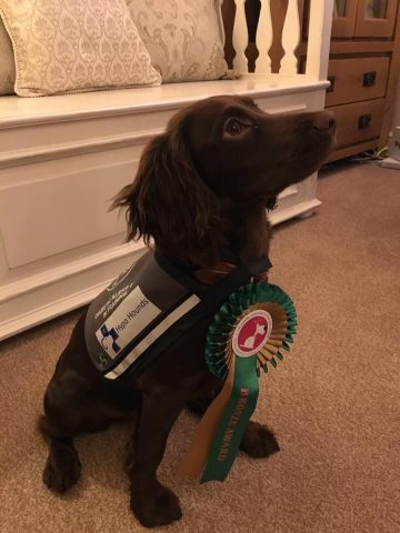 Coco passed her Bronze award
